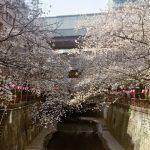 目黒川のお花見情報 マルティーニとのコラボドリンク「生いちごスパークリング」とともにお花見はいかが