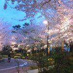 東京ミッドタウン桜並木のお花見情報 今年は富士山のモニュメントが登場 夜には幻想的な演出も!