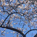 「小さい春見つけた」高崎のプチ旅行で見つけた、小さな春をおすそ分け[雑記]