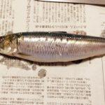 「魚をさばく初級編 築地直送のイワシをさばく」講座に参加! 生まれて初めて魚をさばいてみた!