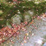 東北で、ちょっとだけ紅葉を楽しんできました。 今年はちょっと早めのようです[雑記]