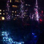 日本橋「願いの森」流星とイルミネーションのコラボレーション 新感覚のイベントに行ってきたよ